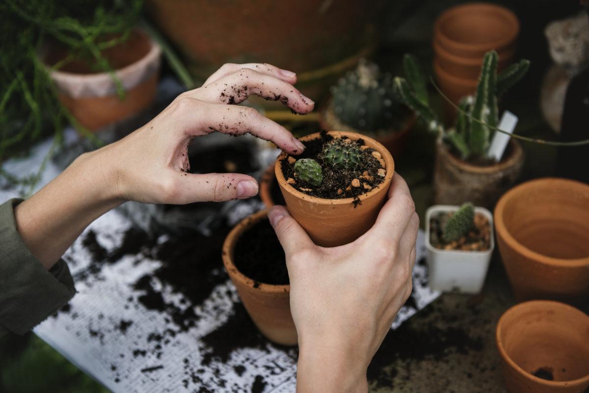hortithérapie, jardin thérapeutique, jardinage, jardin, plantation, bien être, santé, environnement, holissence