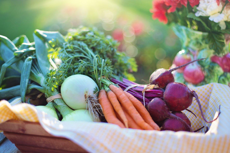 prébiotiques, santé, wellness, probiotiques, flore intestinale, bien-être, holissence